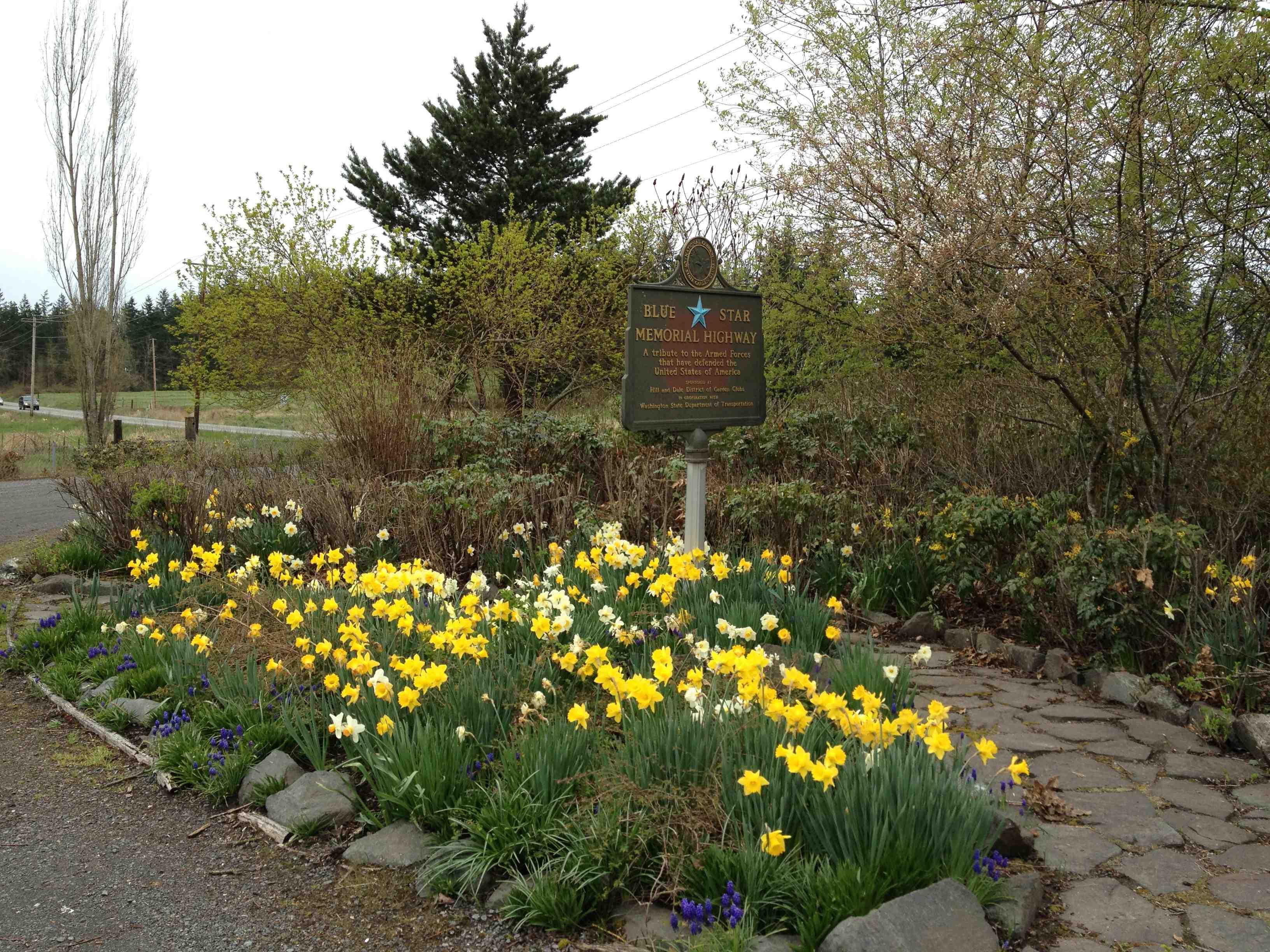 Funky Chase Garden City Collection - Brown Nature Garden ...