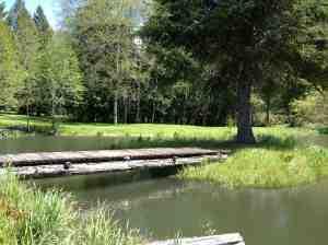 The pond and log bridge