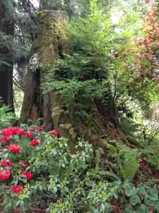 Stump at VanCor Garden