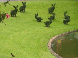 Rabbit topiaries